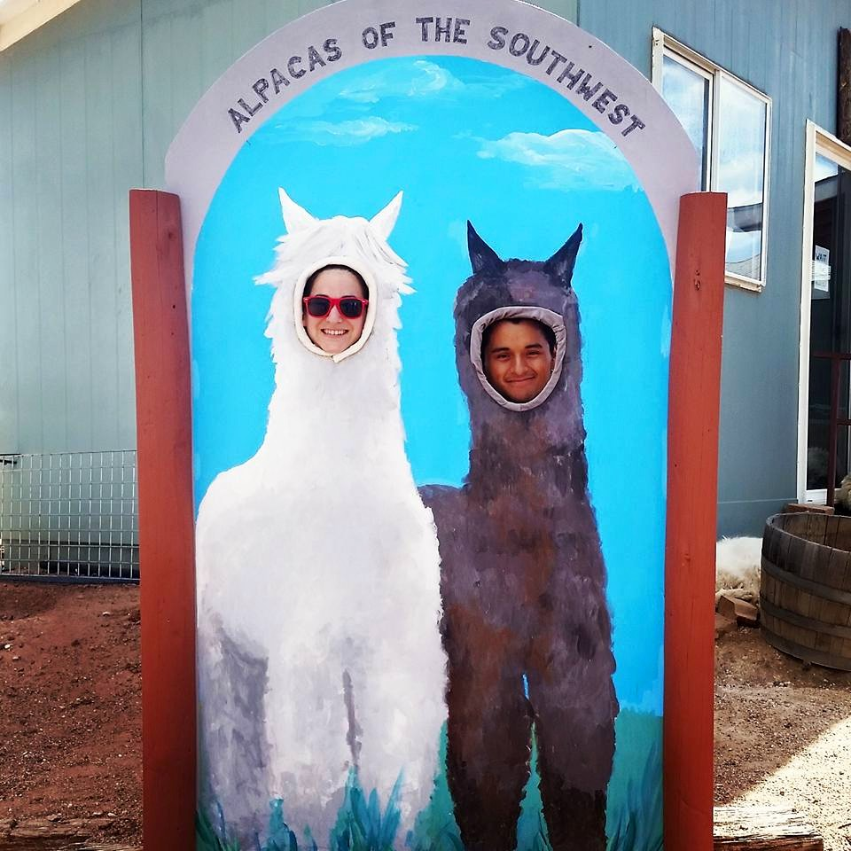 alpacas-of-the-southwest-4